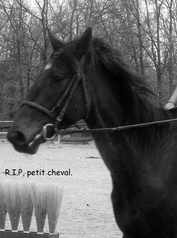 """""""Trop vite"""", un cheval merveilleux... ♥"""