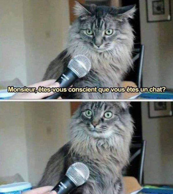 *meow*