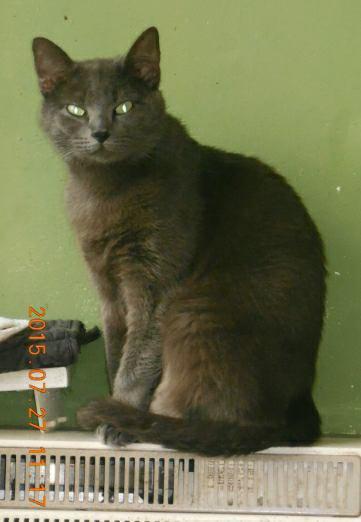 Omé (omega) un des chats de sandy