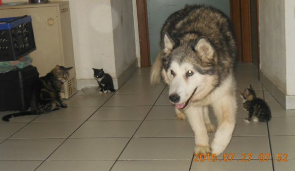 Luna. Au milieu des chats