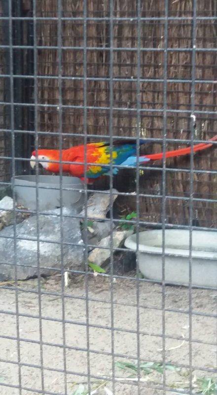 au zoo de maubeuge hier