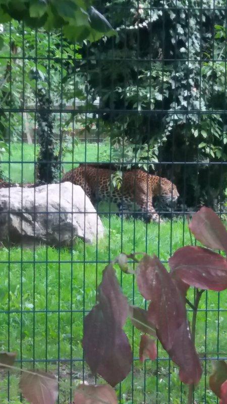 zoo de maubeuge hier