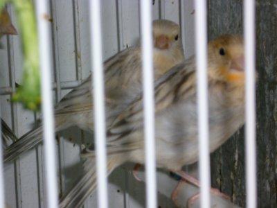 2 crias del 2011