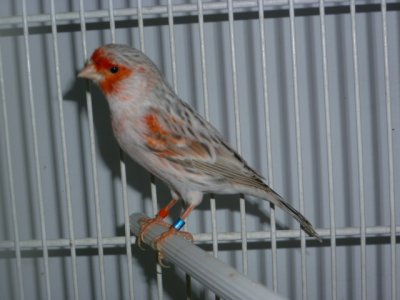 reproductor   2012  (agata pastel rojo mosaico)