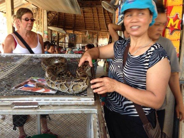 Un beau spécimen de Thaïlande