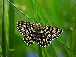 Papillons.