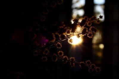 Fleur avec soleil derrière.