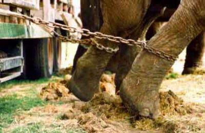 Cirque: Endroit où les chevaux, les poneys et les éléphants sont autorisés à voir des hommes, des femmes et des enfants se conduire comme des idiots.