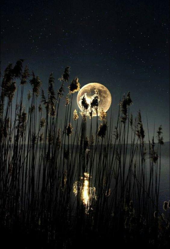 Vibration Musical dans la Nuit.....