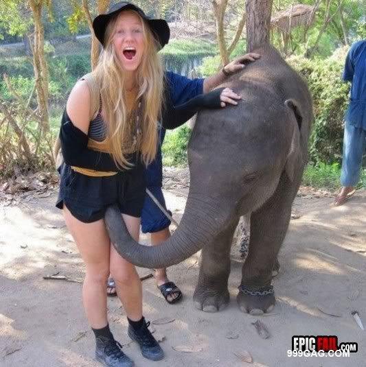 Un éléphant ! ça trompe énormément :-)