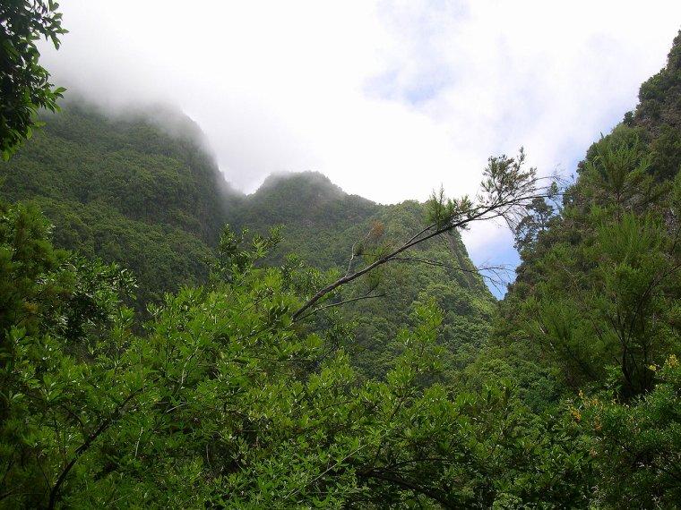 Forêts décidues humides tropicales et subtropicales