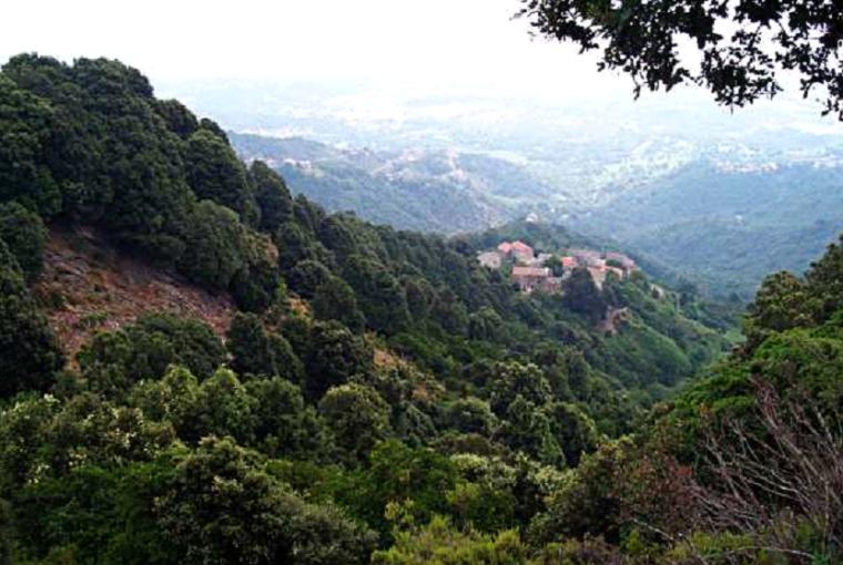 Forêts, terres boisées et broussailles