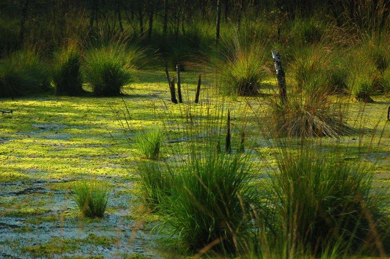 Ecologie _ _ Zone humide