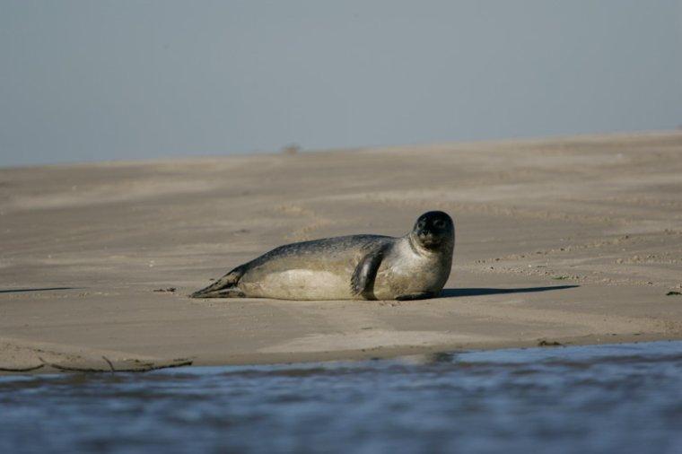 Environnement, Ecologie _ _ Fleuve marin côtier