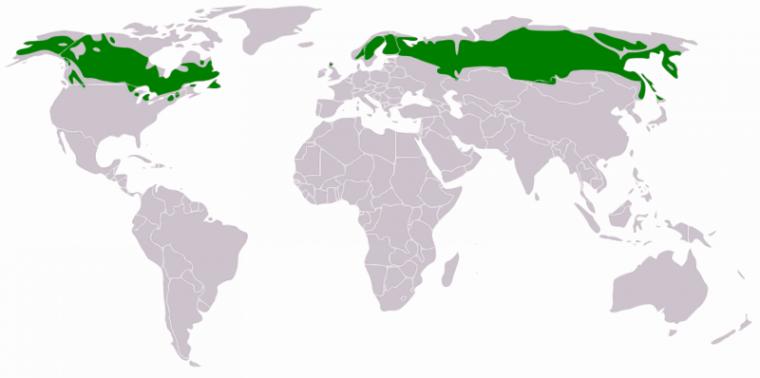 """Résultat de recherche d'images pour """"Répartition géographique des taigas"""""""