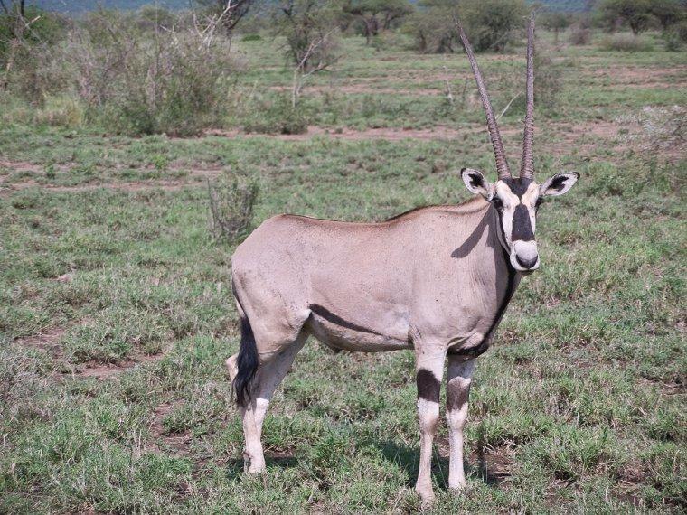 Parcs Nationaux d'Éthiopie