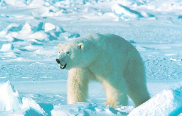 Réserve naturelle du Grand Arctique