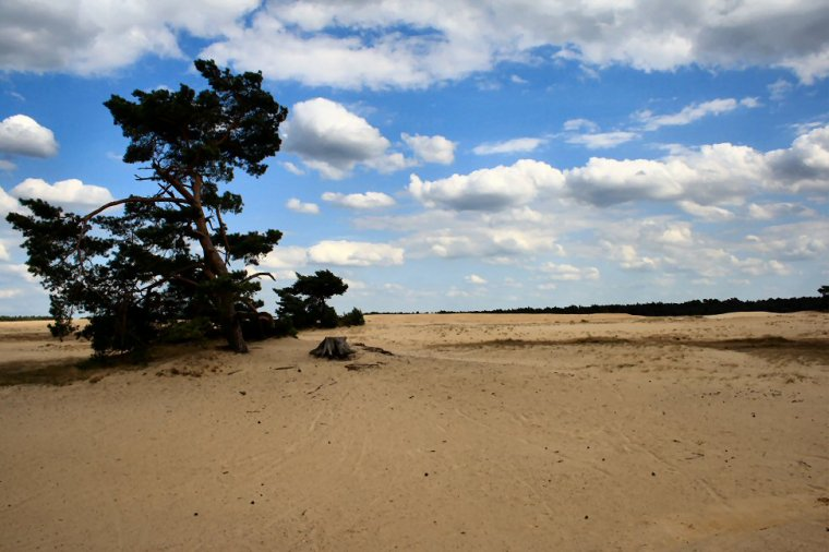 Parc national De Hoge Veluwe