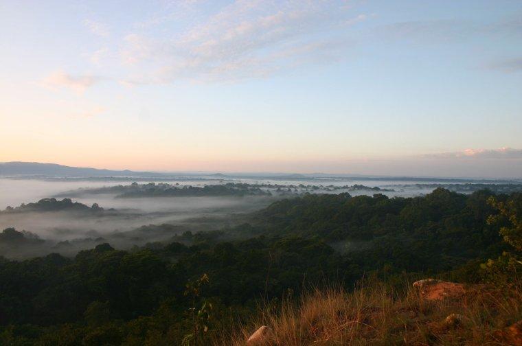 Réserve nationale de la forêt de Kakamega - Kénia