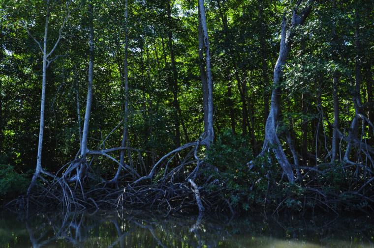 Les forêts du Costa Rica