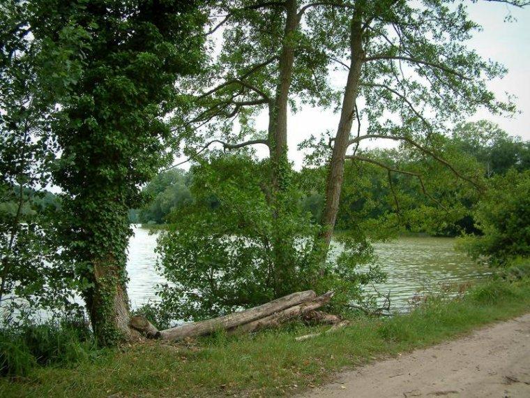 Forêt de Compiègne