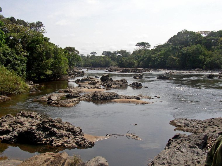 Congo _ Réserve de faune à okapis