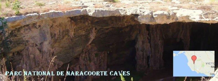Australie _ Parc national de Naracoorte Caves