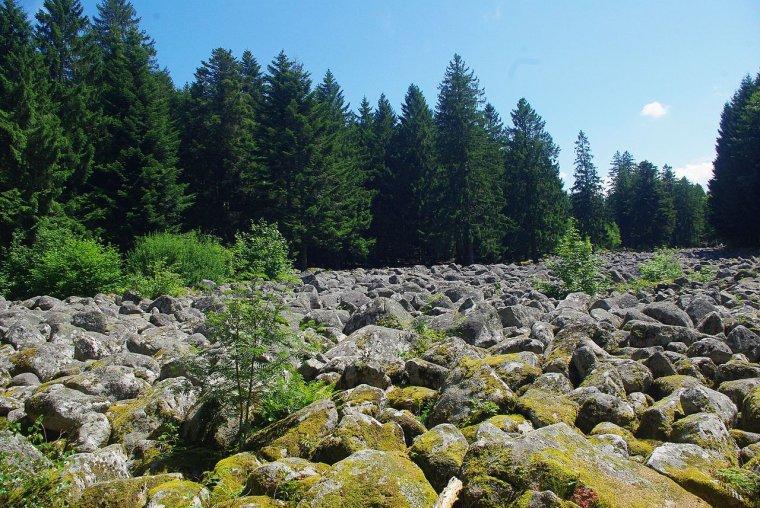 Curiosités géologiques  -  Champ de roches