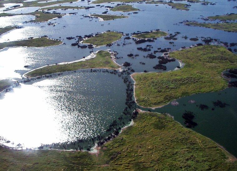 Biome  _  Pantanal