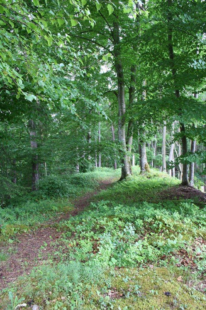Forêt en Suisse