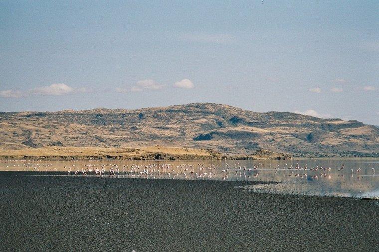 Tanzanie  -  Lac Natron