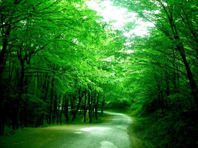 Turquie  -  Forêt de Belgrad