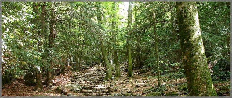 Lieux Sacrés  -  Forêt des Carnutes