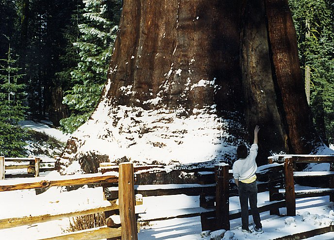 Etats-Unis  -  Parc national de Sequoia