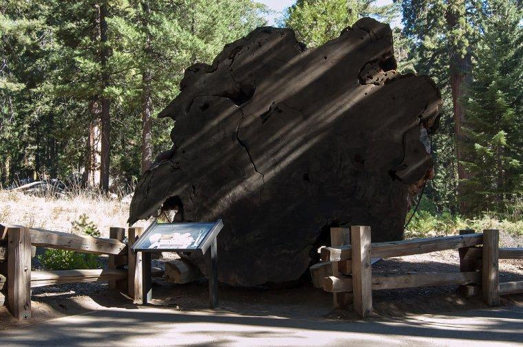 Etats-Unis  -  Parc national de Sequoia