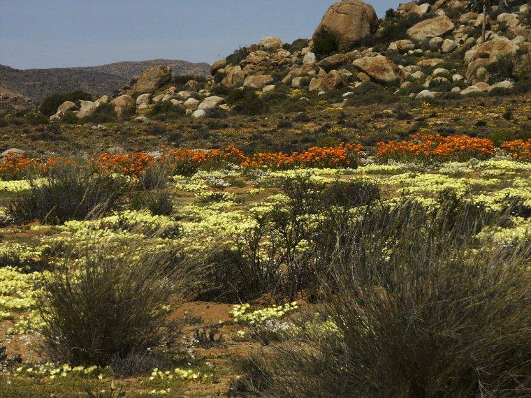 Afrique du Sud  -  Namaqualand