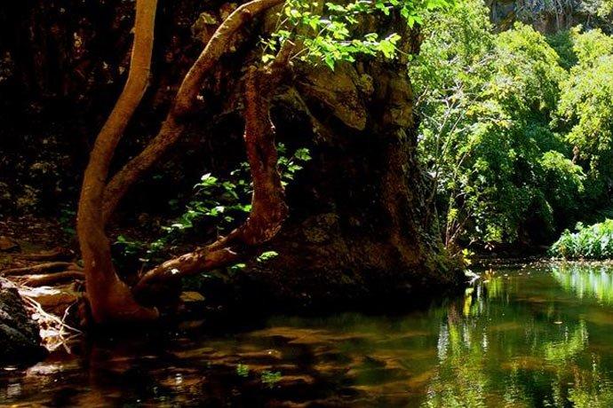 Île Maurice  -  Le parc de Casela