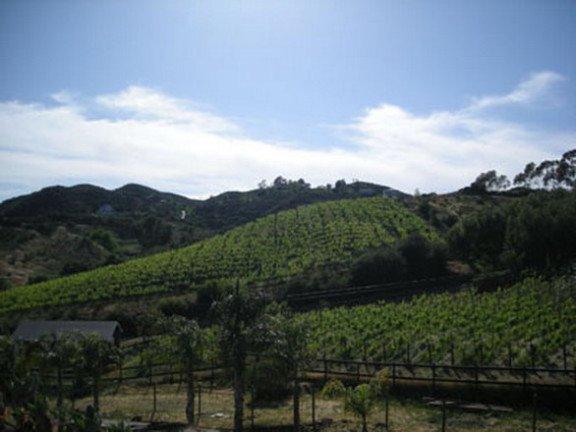 Etats-Unis  -  La route du vin à Malibu