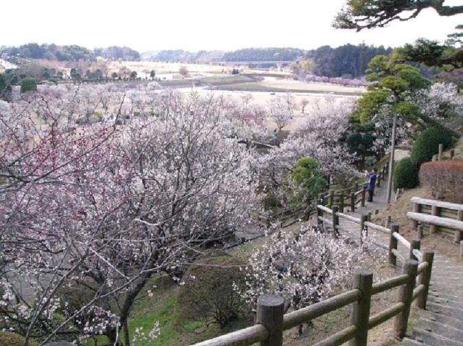 Les 5 plus beaux jardins japonais du Japon