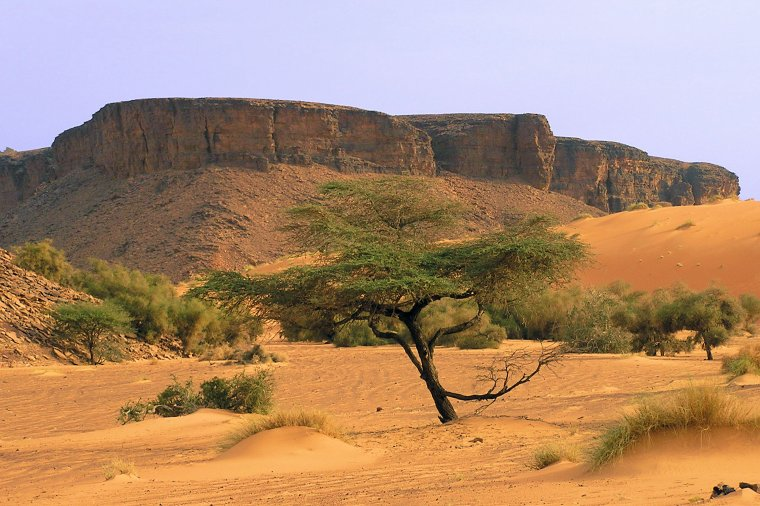 Mauritanie  -  Plateau de l'Adrar