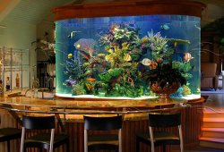 Improving Your Residence with a Fish Aquarium