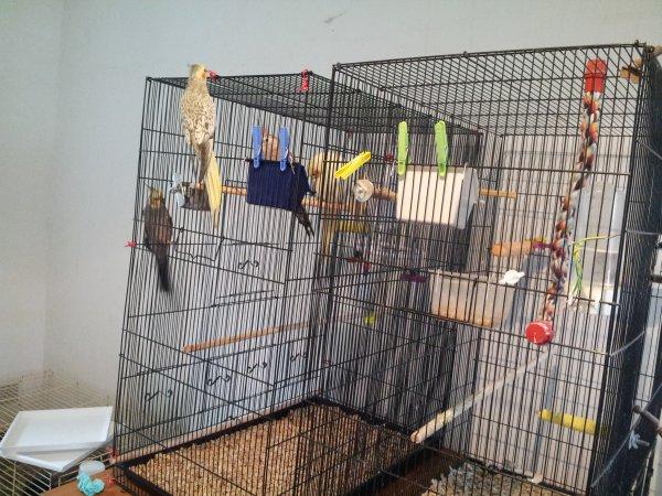 Pièce à oiseaux suite