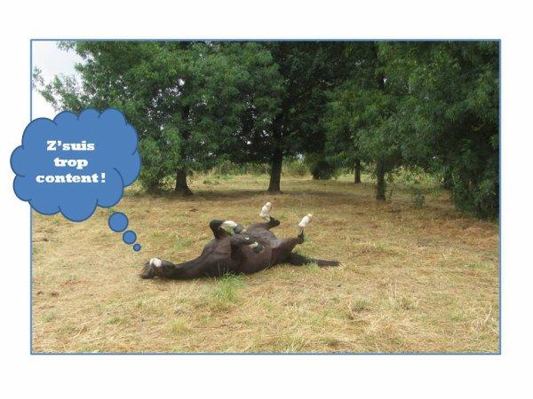LE CANARD'EQUI-LIBRE HORS SERIE SPECIAL LAMOTTE PONEYS PAR ISABELLE