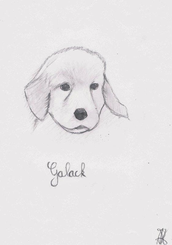 Mon chien Galack