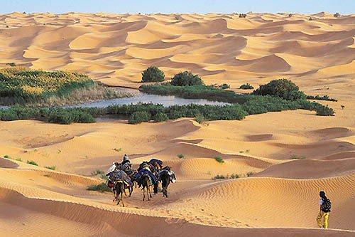 mon desert