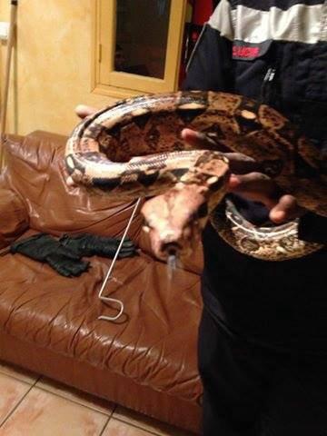 python royal trop bo !!!