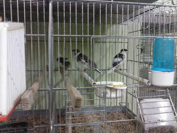 Sevrage des jeunes oiseaux (18 à 30 jours)