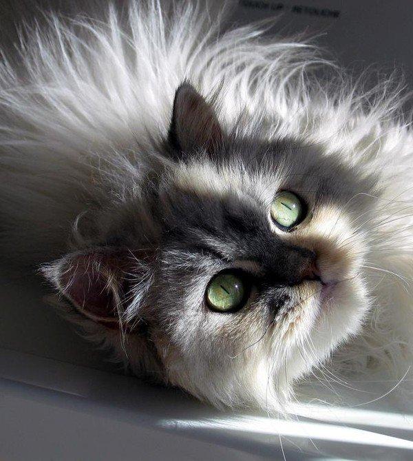 -ooo- Très beau chat -ooo-