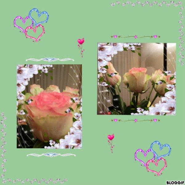 -ooo- Une pensée particulière pour ma nouvelle petite étoile spéciale en ce 21, elle aimait ces belles roses  -ooo-