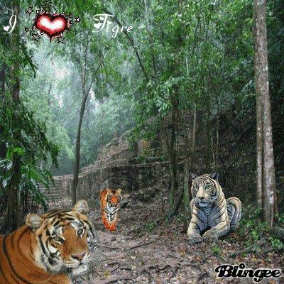 le tigre!!!